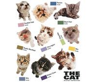 Наклейка IDESIGN CAT 751L фото